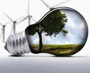 Light bulb with tree in the reflection